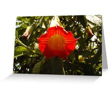 Angel bellowing down  Greeting Card