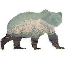 Denali Bear Photographic Print