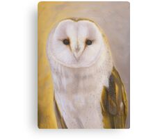 Surrey - British Barn Owl Portrait Canvas Print