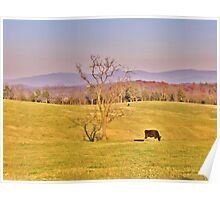 Tree In The Pasture Poster