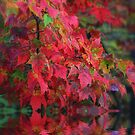 Fall is a Fading Memory by Brian104