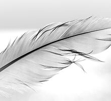 Feather by Pete5
