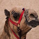 Tattooed Camel in Giza by Michael Brewer