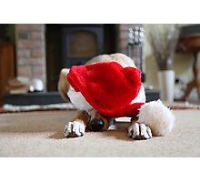 Funny Dog at Christmas Wearing Xmas Hat Photographic Print