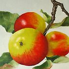 Autumn Apples by Lynne  M Kirby BA(Hons)