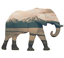 Elephant and Homer Spit Photographic Print