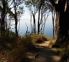 Discovery Park Seattle Washington by Fred Slocombe