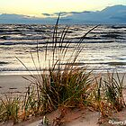 Grasses on the Beach by BarbL