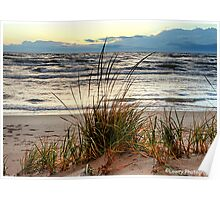 Grasses on the Beach Poster