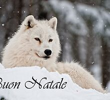 Arctic Wolf Christmas Card Italian 1 by WolvesOnly