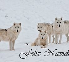 Arctic Wolf Christmas Card Spanish 2 by WolvesOnly