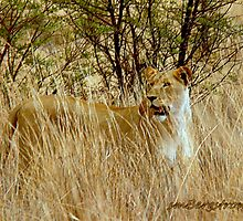 On The Hunt by Susan Bergstrom