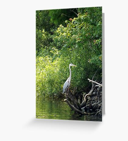Crane Silloutte Artistic Photograph by Shannon Sears Greeting Card