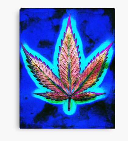 Hemp Lumen #10 Marijuana/Cannabis Canvas Print
