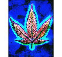 Hemp Lumen #10 Marijuana/Cannabis Photographic Print