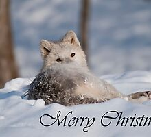 Arctic Wolf Christmas Card English 3 by WolvesOnly