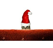 Millie Mac Christmas Hat Photographic Print