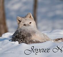 Arctic Wolf Christmas Card French 3 by WolvesOnly