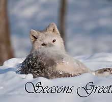 Arctic Wolf Seasons Card 3 by WolvesOnly