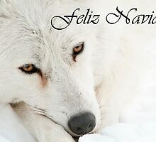 Arctic Wolf Christmas Card Spanish 4 by WolvesOnly