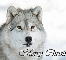 Arctic Wolf Christmas Card English 5 by WolvesOnly