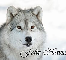 Arctic Wolf Christmas Card Spanish 5 by WolvesOnly