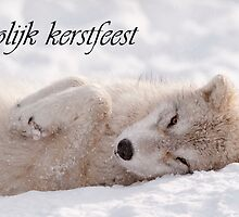 Arctic Wolf Christmas Card Dutch 6 by WolvesOnly