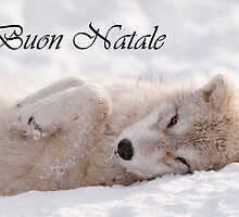 Arctic Wolf Christmas Card Italian 6 by WolvesOnly