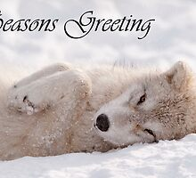 Arctic Wolf Seasons Card 6 by WolvesOnly