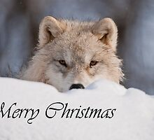 Arctic Wolf Christmas Card English 7 by WolvesOnly