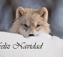 Arctic Wolf Christmas Card Spanish 7 by WolvesOnly