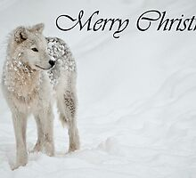 Arctic Wolf Christmas Card English 8 by WolvesOnly