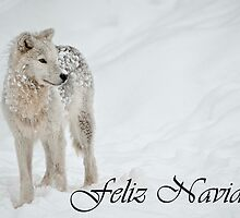 Arctic Wolf Christmas Card Spanish 8 by WolvesOnly