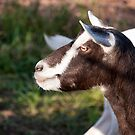 Goat Profile by jayneeldred