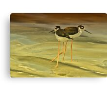 Black-neck Stilt Canvas Print