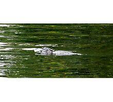 Rodman Gator Artistic Photograph by Shannon Sears Photographic Print