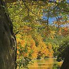 River View by Tamas Bakos