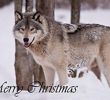 Timber Wolf Christmas Card English 3 by WolvesOnly