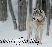 Timber Wolf Season Card 4 by WolvesOnly