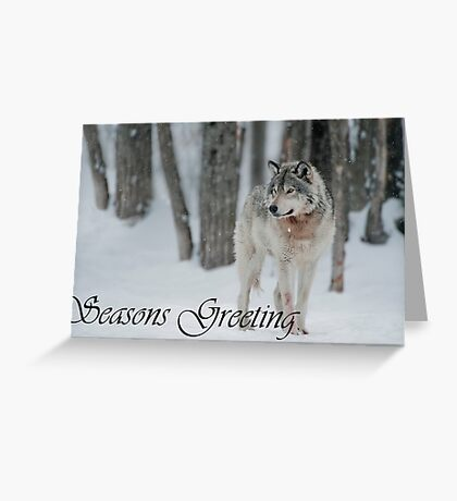 Timber Wolf Season Card 4 Greeting Card