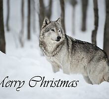 Timber Wolf Christmas Card English 6 by WolvesOnly