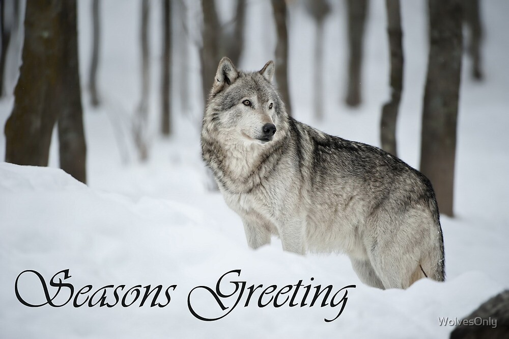 Timber Wolf Seasons Card 6 by WolvesOnly