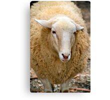 SA Sheep Canvas Print