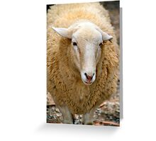 SA Sheep Greeting Card