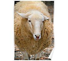 SA Sheep Poster