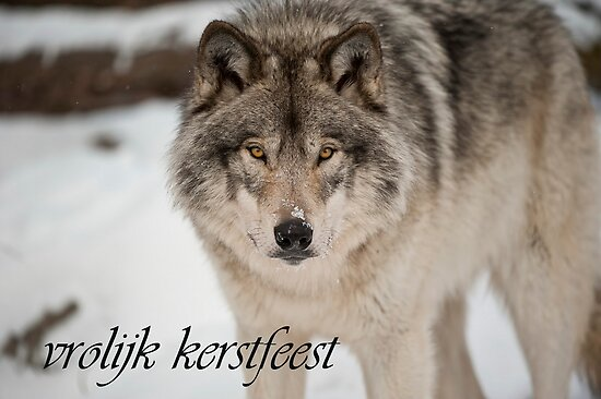 Timber Wolf Christmas Card Dutch 8 by WolvesOnly