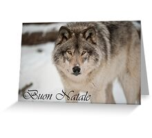 Timber Wolf Christmas Card Italian 8 Greeting Card