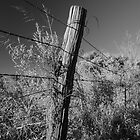 Barbed Wire on Pole by Axiz