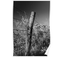 Barbed Wire on Pole Poster
