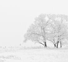 White Winter Charm by Lucie Rovná